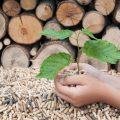 木材チップを掴む手