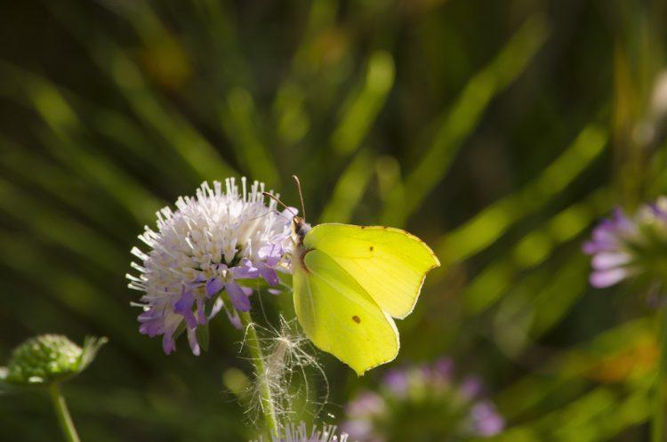 花に止まるチョウ